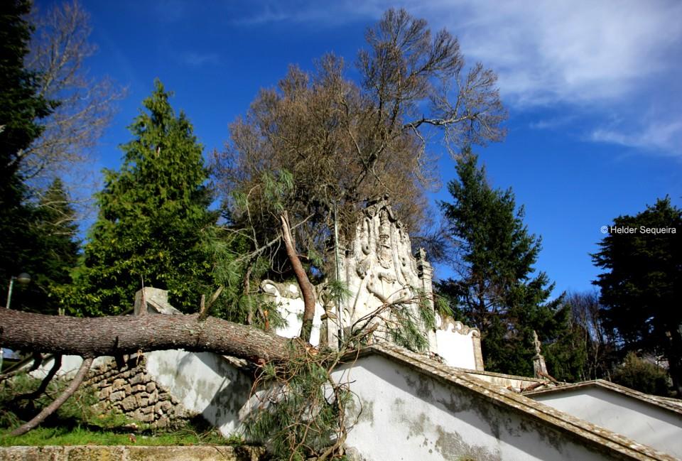 Queda de Árvores - Alameda - hs.jpg