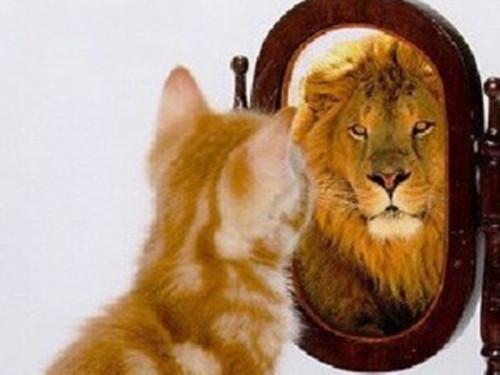 Espelho meu espelho meu.jpg