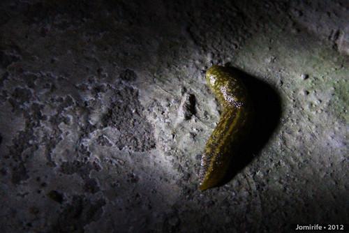 Lesma / Slug (31)