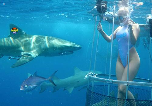 5_camsoda_shark_cage_molly_cavalli3638086385.jpg