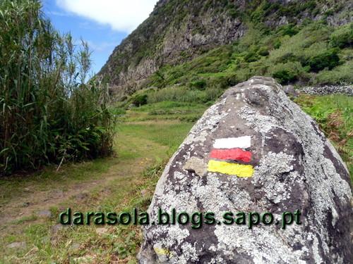 Azores_flores_faja_grande_03.JPG