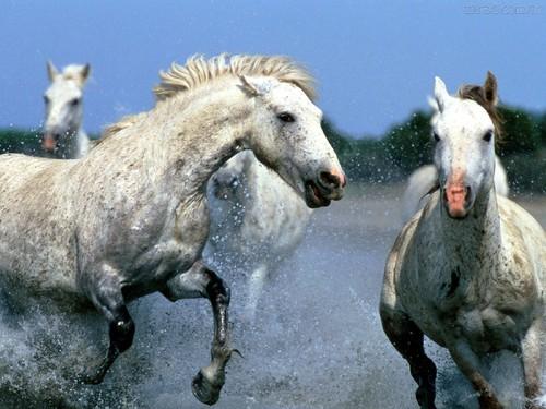 Cavalos na praia.jpg