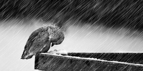 Estes finais de Inverno.jpg