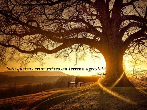 Crie raízes na vida - Marcos Keld.jpg