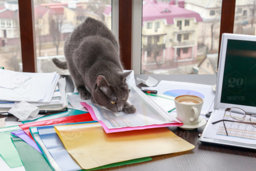 stock-photo-cat-finance-paperwork-laptop-desk-docu