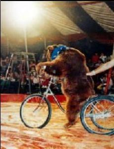 urso_bicicleta.jpg