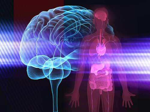 Cérebro e corpo