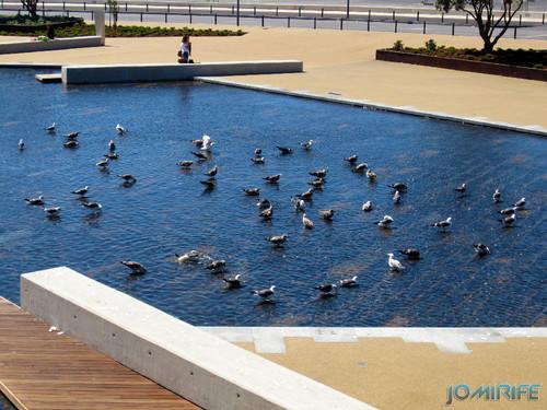 Gaivotas no jardim Espelho de água Figueira da Foz [en] Gulls in the garden Water mirror Figueira da Foz