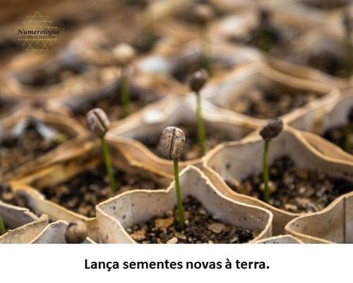 lança sementes novas à terra.jpg