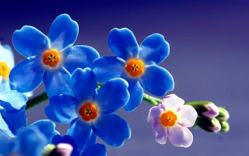 180419_azul_miosotis.png
