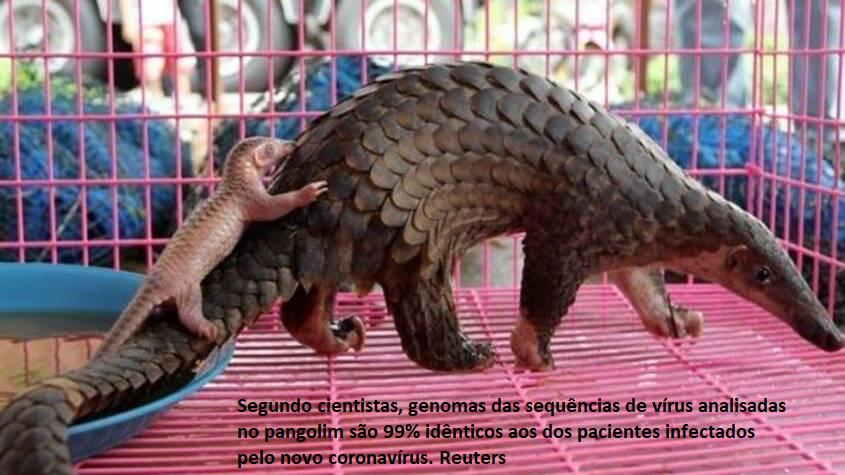 Pangolim.png