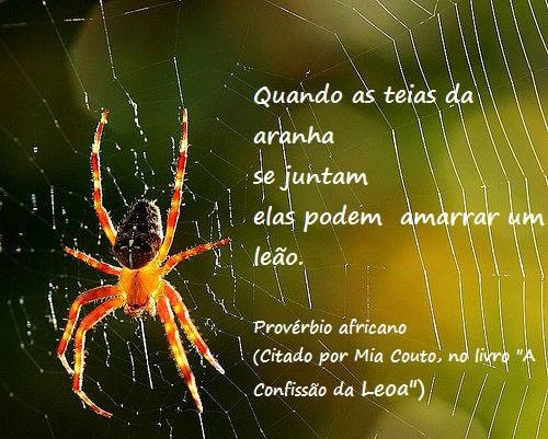 Frases do Facebook Quando as teias da aranha se juntam