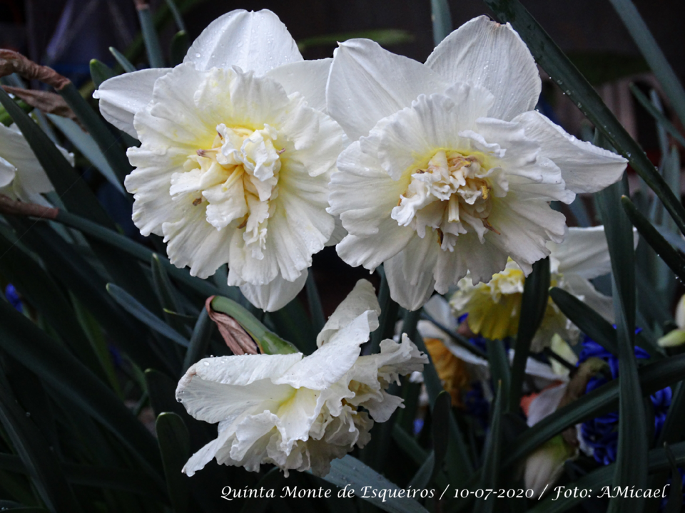 4 - Narciso - DSC06099.png