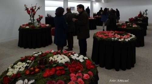 2 - Exposição de Camélias - 04Fev2018 - DSC0366