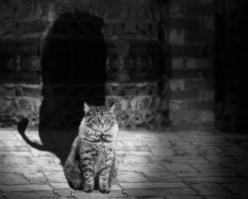 cat-564202.jpg