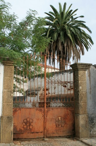 Seminário Gavião palmeira.jpeg