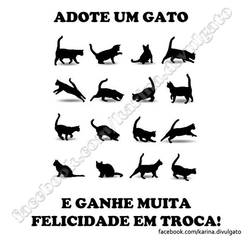 Adopte um gato