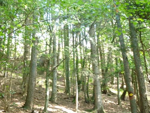 Floresta-limpa