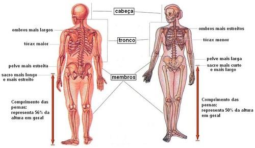 Esqueleto masculino e feminino