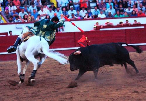 Moura Junior e um dos últimos ferros com o cavalo Belmontim...