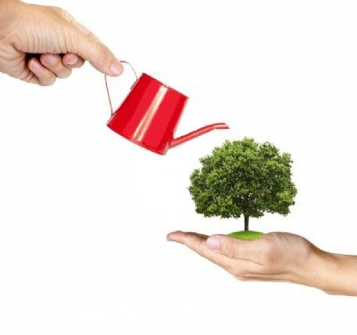 Rega de bonsai, problemas e soluções