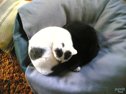 Gatos Yin e Yang / Yin and Yang Cats