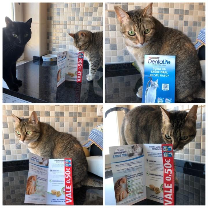 Denta gato.jpg