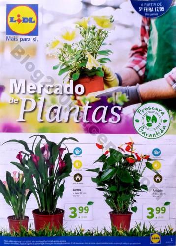 mercado plantas lidl_1.jpg