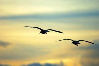 Pássaros-no-céu-lindo-.jpg
