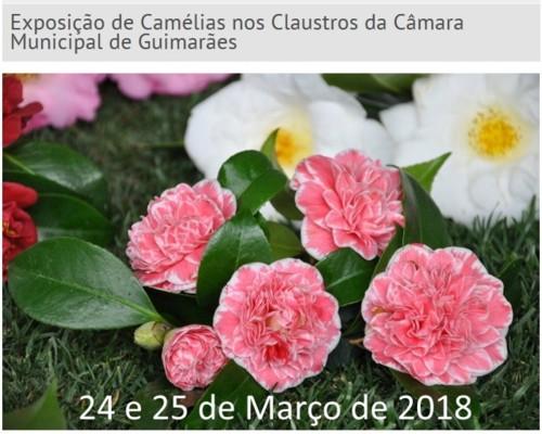 Guimarães - Exposição de Camélias - 24 e 25 de