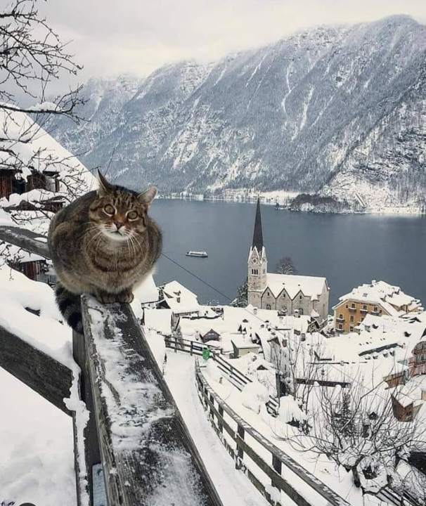 Os gatos não têm vertigens....jpg