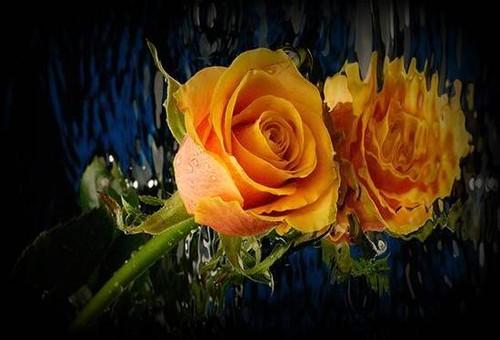 flor 3.jpg