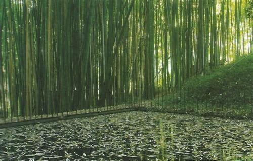 Jardim Botânico bambuzal.jpg