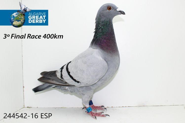 ES-244542.jpg