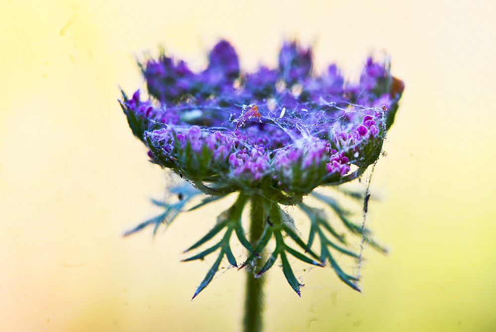 gratidao-flor.jpg