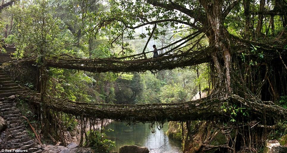 ponte natural