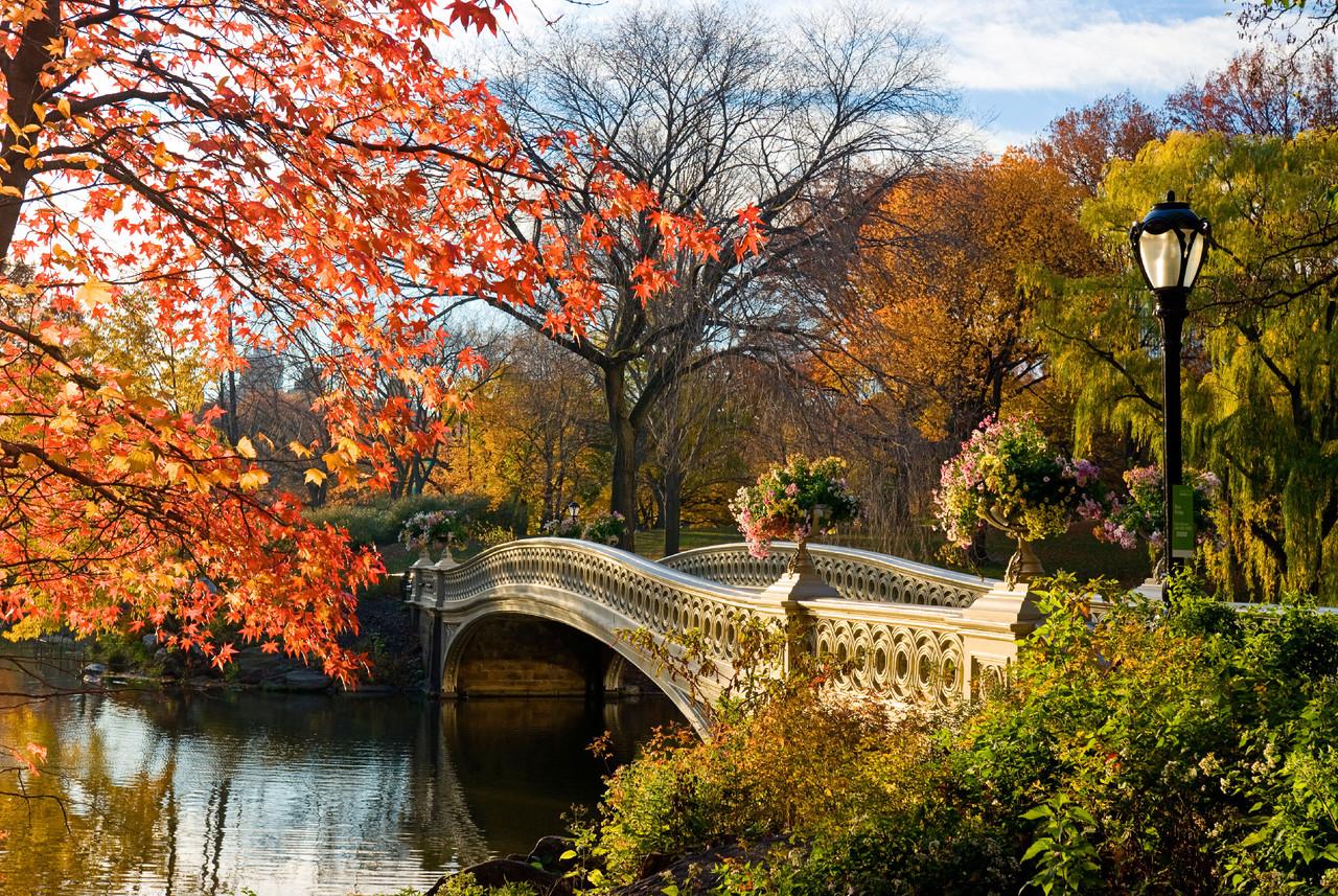 545b93fd35a91eee7e795f1e_bow-bridge-central-park-n