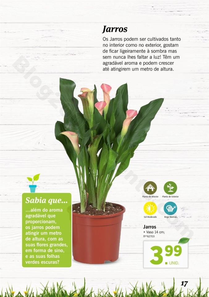 Mercado-de-Plantas-A-partir-de-04.04-01_016.jpg