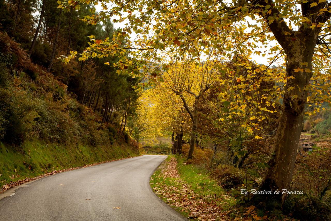 Outono em Pomares (10).JPG
