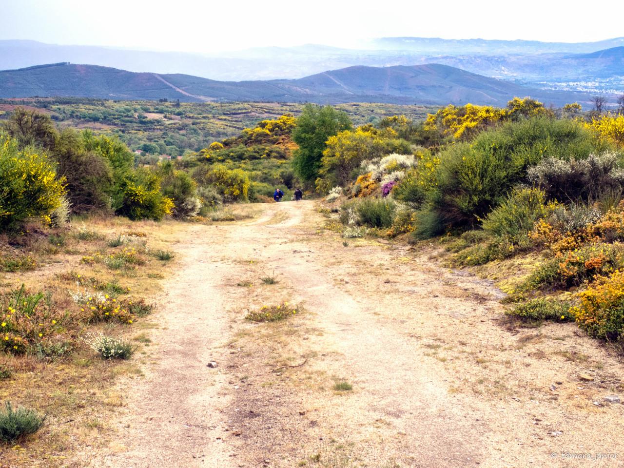 CPIS - 2ª etapa (Verín-Viladerrei) (152).jpg