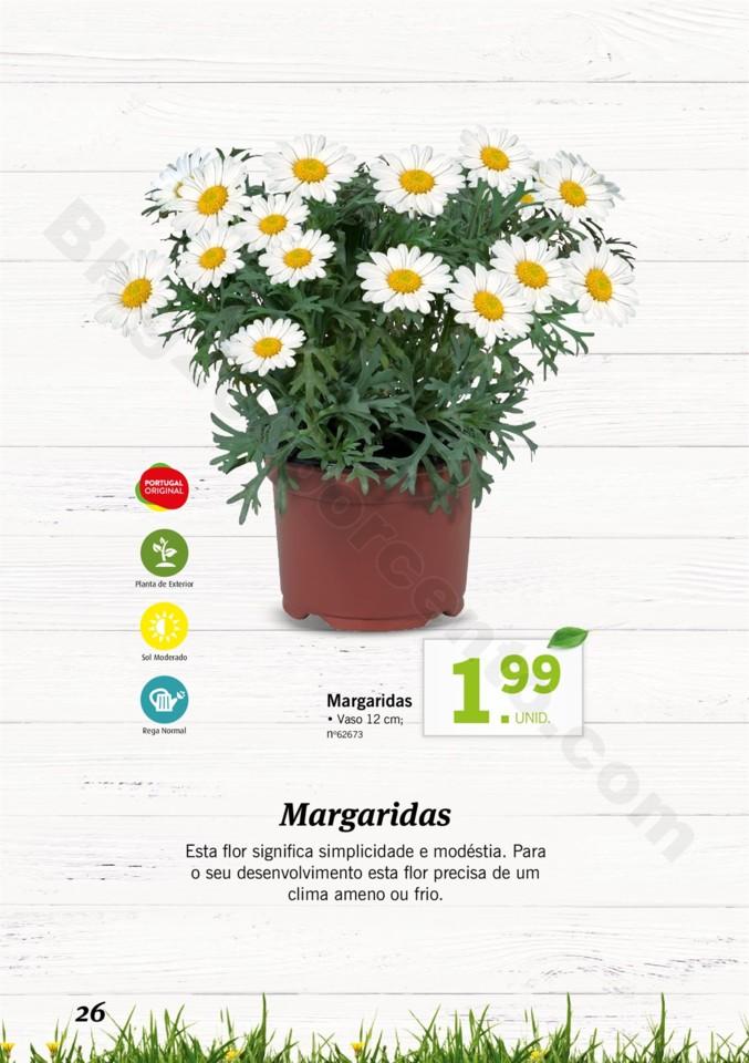 Mercado-de-Plantas-A-partir-de-04.04-01_025.jpg