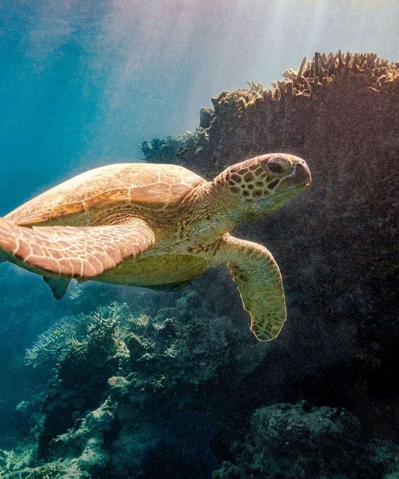 turtle-in-ocean.jpg