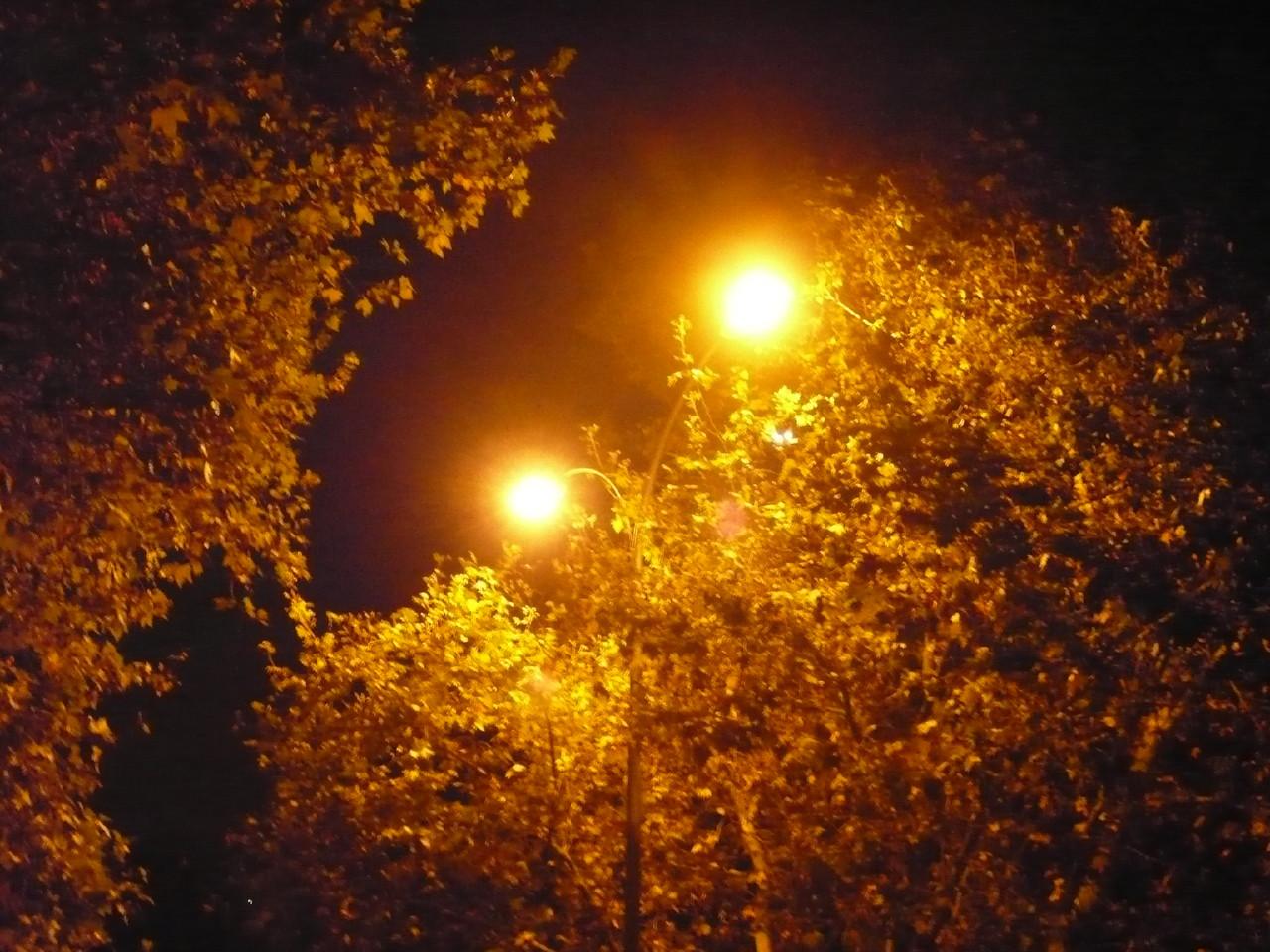 Noite dourada