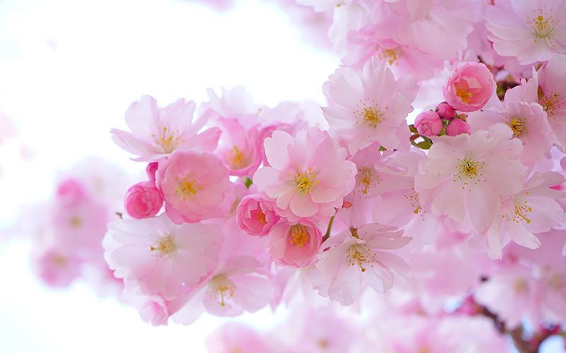 ramo-flores-800x500.jpg