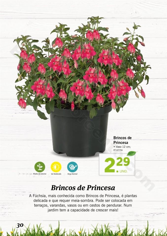 Mercado-de-Plantas-A-partir-de-04.04-01_029.jpg