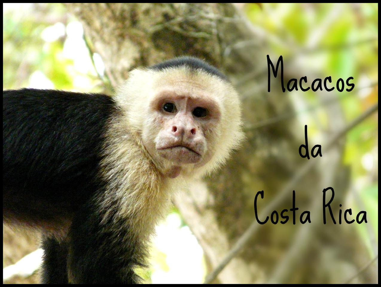 Macacos da Costa Rica.jpg