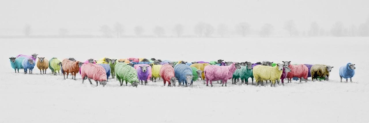 sheep-1476781_1280.jpg