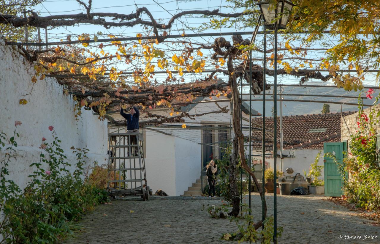 2017.- Pelo Douro no outono II (540).jpg