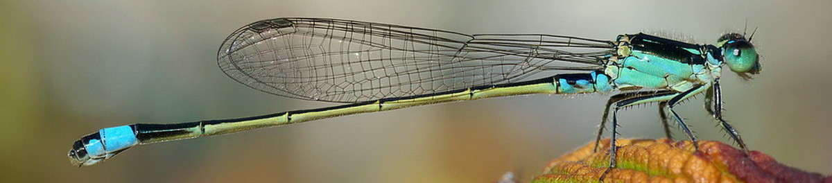 dragonfly-62963_960_720.jpg