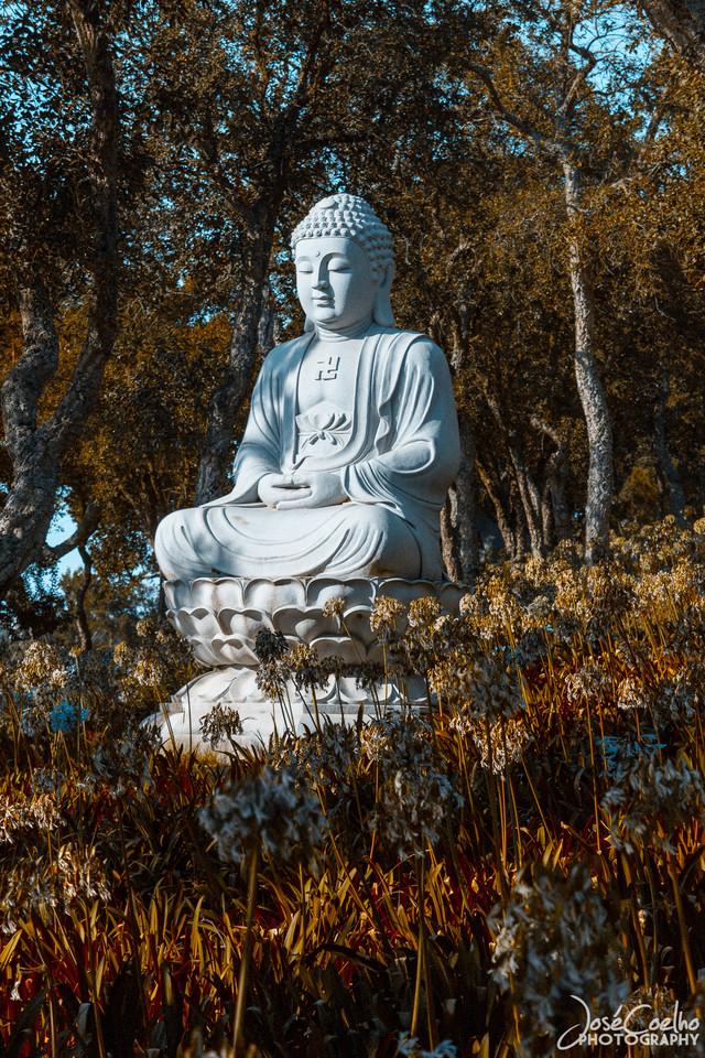 buda, buddha, jardim, bombarral, loridos, bacalhoa